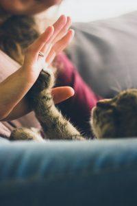 מחירי החיסונים לחתולים
