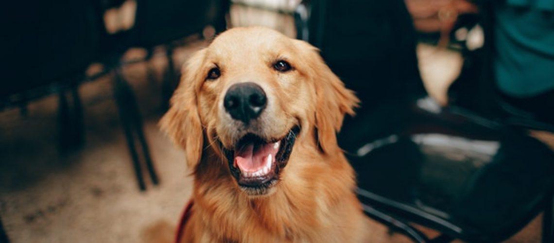 חיסון משושה לכלב
